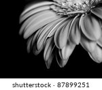 Petals Of A Beautiful Flower O...
