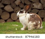 the rabbit | Shutterstock . vector #87946183