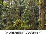 Amazonian Rainforest In Ecuado...