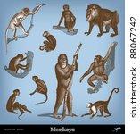 Engraving Vintage Monkeys Set...