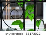 Wrought Iron Garden Fencing