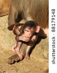 baby baboon monkey | Shutterstock . vector #88179148