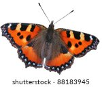 Stock photo isolated big red butterfly small tortoiseshell on a white background 88183945