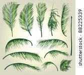 Palm Tree Leaves . A...