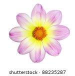 fresh yellow pink dahlia flower ... | Shutterstock . vector #88235287