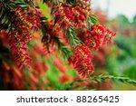 flowers of  the garden   Shutterstock . vector #88265425