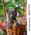 Stock photo small funny kitten sitting in a basket in summer day 88307593