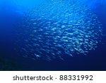 Underwater Sardines On Blue...