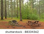 A Campsite In An Old Growth...