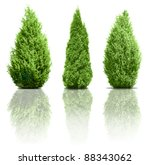 green trees isolated on white... | Shutterstock . vector #88343062