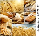 Set of traditional bread, wheat and cereal - stock photo
