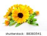 Calendula. Flowers Isolated On...