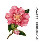 the flower of camelia drawn by... | Shutterstock . vector #8839924