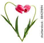 Heart From Two Tulips On A...