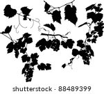 illustration with grapes and...   Shutterstock .eps vector #88489399