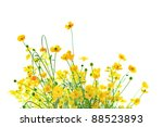 Little Yellow Flowers On White...