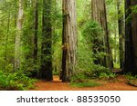 Redwood National Park In...