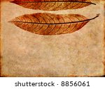 lovely brown background image... | Shutterstock . vector #8856061