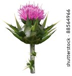 milk thistle | Shutterstock . vector #88564966