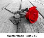 Red Rose On Wood Floow   Black...