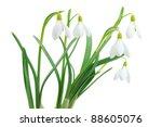 Spring Snowdrop Flowers Bouque...