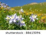Wildflowers In Full Bloom On...