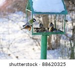Winter Feeding Trough For The...