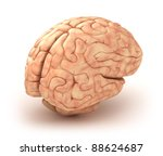 Human brain 3D model, isolated - stock photo