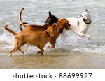 Stock photo dogs playing and splashing in water at the beach 88699927
