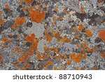 Grey And Orange Lichen Make A...