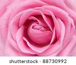 Stock photo beautiful pink rose closeup 88730992
