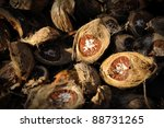 Dried Betel Nut or Areca Nut. - stock photo