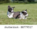 two cute puppies are playing... | Shutterstock . vector #88779517