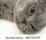 Cat in narcosis in veterinary hospital - stock photo