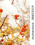 Autumn Time  Red Wild Rose Hip...