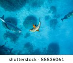 highlighted fish underwater | Shutterstock . vector #88836061