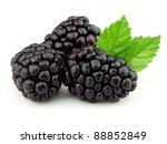 Blackberry in closeup - stock photo