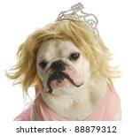 Spoiled Dog   English Bulldog...