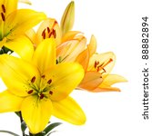 Yellow And Orange Lilies...
