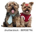 Yorkshire Terriers Dressed Up ...