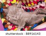 Stock photo british kitten rare color lilac sleeping 88916143