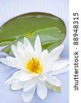 White Lotus Flower Or Water...