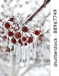 Red Berries With Icicles  Close ...