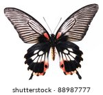 Stock photo black and red stripes butterflies isolated on white background 88987777