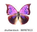 Purple Butterflies Isolated On...