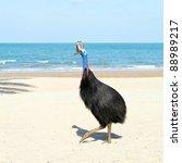 endangered wild cassowary on... | Shutterstock . vector #88989217