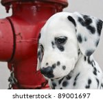 Dalmatian Puppy Next To A Red...