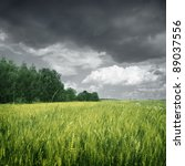 Wheat Field Over Dark Moody Sky.