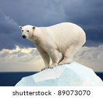 Small photo of polar bear in wildness area against sea landscape