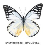 White And Black Butterfly On ...